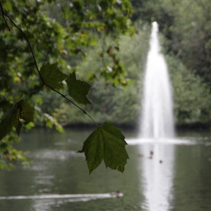 Taken at the Elisabeth Park near Buckingham Palace.